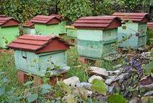 Bee Hives / by Carol Hagen