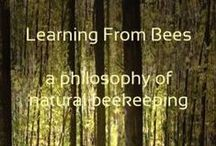 Bee Sanctuary Plans