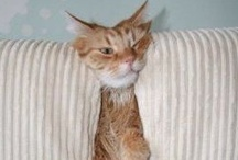 Funny Cats / Funny Cats Pics and Memes