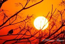 Sunrise / sunrise pic