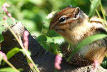 Life on Earth / animal,bird,bug..more more..
