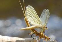 insekts and