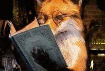 fox ,