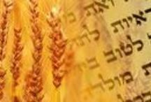Shavuot / by First Fruits of Zion