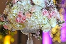 Dream Wedding / by Stephanie Petrofski