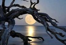 ☆Moonlit☆ / by Wendy Kennedy