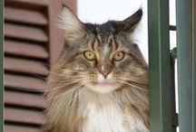Mondo Gatto/Gatti - Cat World / gatti, gatti, gatti, ....e qualche intruso... #cats #cats #cats