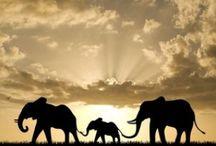 Big, bigger, elefant!
