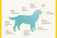 Healthy Dog Tips / A healthy dog is a lucky dog.