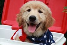 Patriotic Pups / Making our country cuter one tail wag at a time.