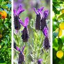 Aromatherapy Naturally / Aromatherapy and essential oil information