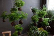 Greenery / I love succulents
