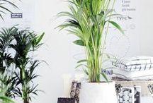 Home   Indoor Plants