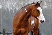 Horses / by Wanessa Oliveira