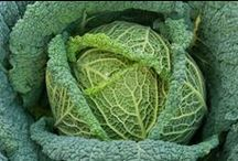 Green Note Natural / ABT Code: 1300 FEMA: None CAS: None Odor: Taste: Green, Leafy Flavor Use: Green
