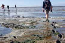 Waddenland The Netherlands / In the north of The Netherlands there's a bit of a hidden but beautiful area full of natural discoveries, like the darkest nature park in Europe and: mudflat hiking.