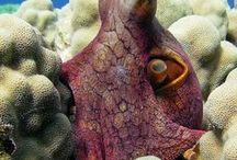 Octopuses & Squids