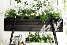 Planters and pots / Ideas for plant pots, in the garden and in the house.