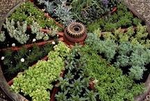 Arq. Paisagismo, Jardins, Hortas & Etc / by Angela Ricciardi