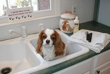 Pet Care & Tips