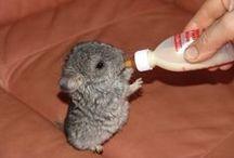 Mini animals / everything cute if its mini! Even if temp mini.