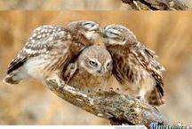 Owls / Big or small i like them