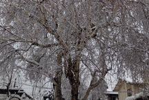 Winter Wonderland / Winter wonderlands and peaceful places