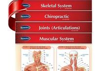 Permacharts - Medicine & Anatomy Quick Reference Guides / All the best medical and anatomy quick reference guides in one place for the world leader!