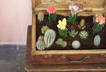 I'm Cactus Obsessed