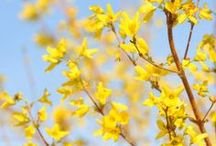 SB: Springy Spring