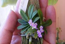 orchidea terrárium