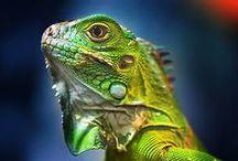 Animales y Naturaleza / Flora y Fauna de Acapulco