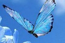baterflys