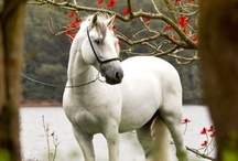 Warms my heart, makes me smile♥ / I love horses / by Filomena Penland