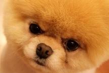 Boo is so cute!