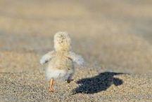 so cute ! / cute photos I found :)