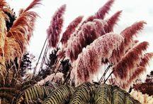 LK | plant life
