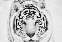 World Animals WWF