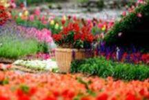 Rośliny / Do dekoracji własnej przestrzeni możemy użyć także roślin i motywów florystycznych. Ba - znamy wiele pięknych wnętrz, w których rośliny są jedyną dekoracją