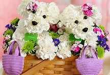 Carnation Flower Arrangement / Carnations are one of the most elegant flowers. Carnations make a perfect gift for just about anyone you care for. You can now buy carnations flowers in India online. Arrange your carnation flowers delivery online today!