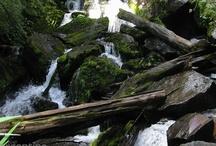 Parque Nacional Los Alerces / Parque Nacional en la provincia de Chubut, Patagonia, Argentina: http://ow.ly/ghETO