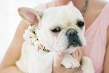 collar accessories for pets// muchy, przypinki i ozdoby dla pupili