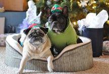 Christmas frenchies// Bulwy w świątecznym wydaniu