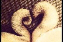 przyjaźń między zwierzakami // friendship between pets