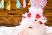 """Snort Life Accessories / Tapping into your Pig's inner """"Pigshionista"""" with fabulously, dazzling accessories."""