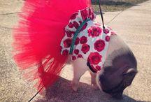 Snort Life Pigshionista / Mini Pig & Other Pet Dresses