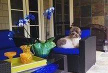 Pet Friendly Homes-Designs for a Livable Home™ / Do you have a Pet? How to design a pet friendly home. Pet decor, Dog decorating ideas, cat decor, cat friendly decorating ideas,