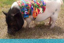 Snort Life His/Hers Shirts / Mini Pig & Other Pet Shirts