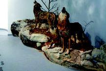 La Casa del Lobo / Centro de Interpretación dedicado al lobo ibérico.