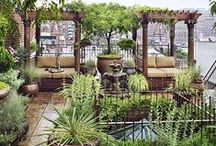 Roof Top Garden Idea